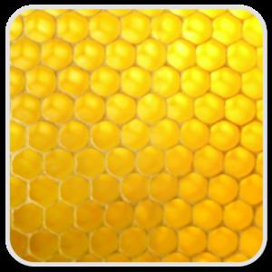honey-olea