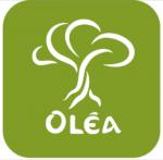 Olea-Soap.gr Χειροποίητα Σαπούνια Ελαιολάδου